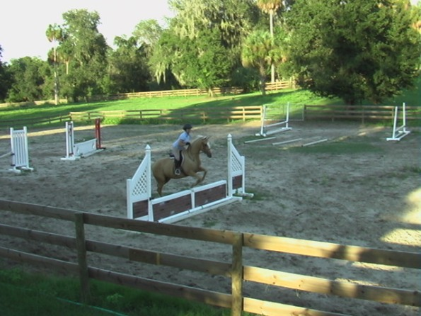 WelBreds Show Barn Hunter Jumper Ring